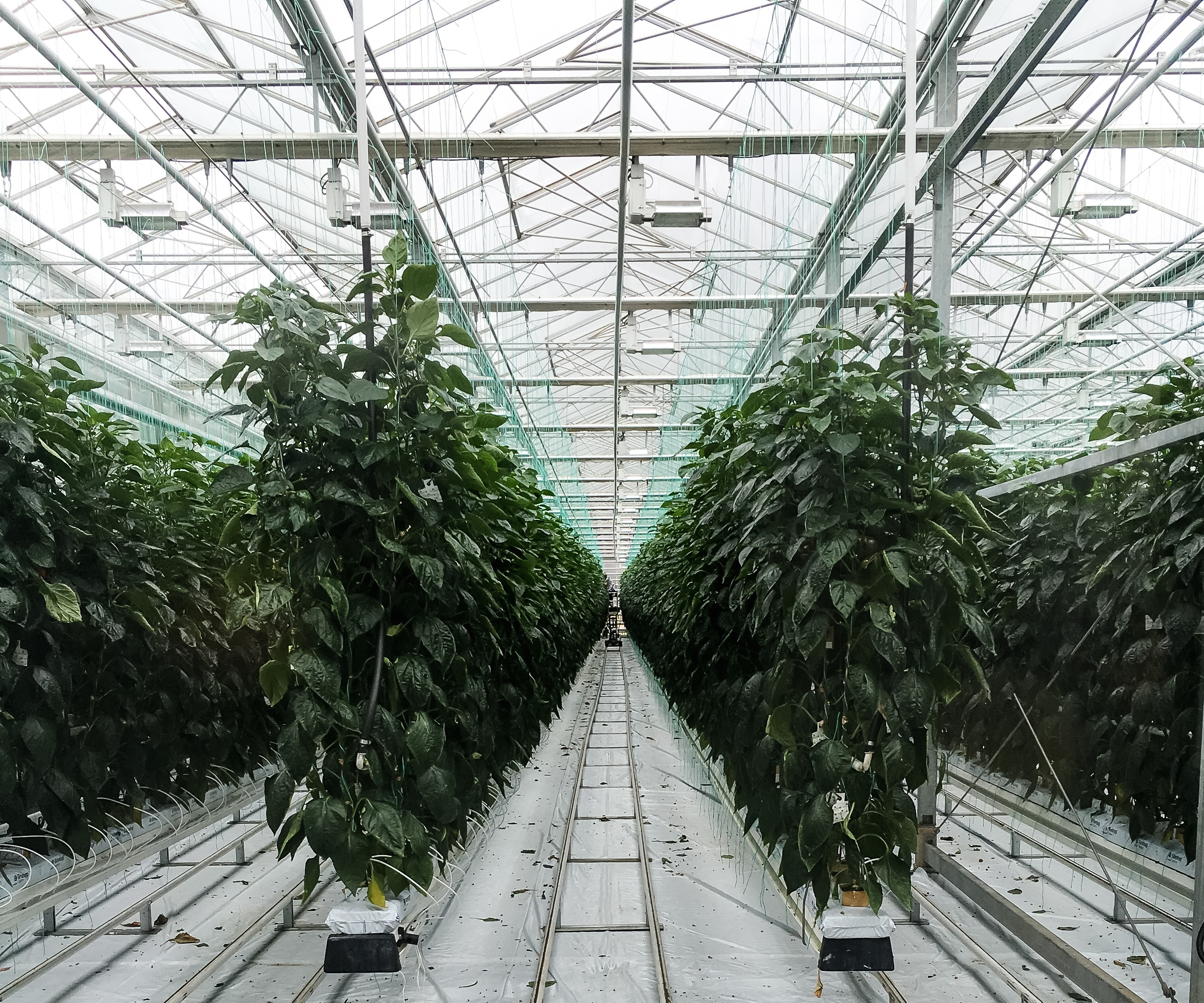 What you need to know about Indoor Farming | Growlink