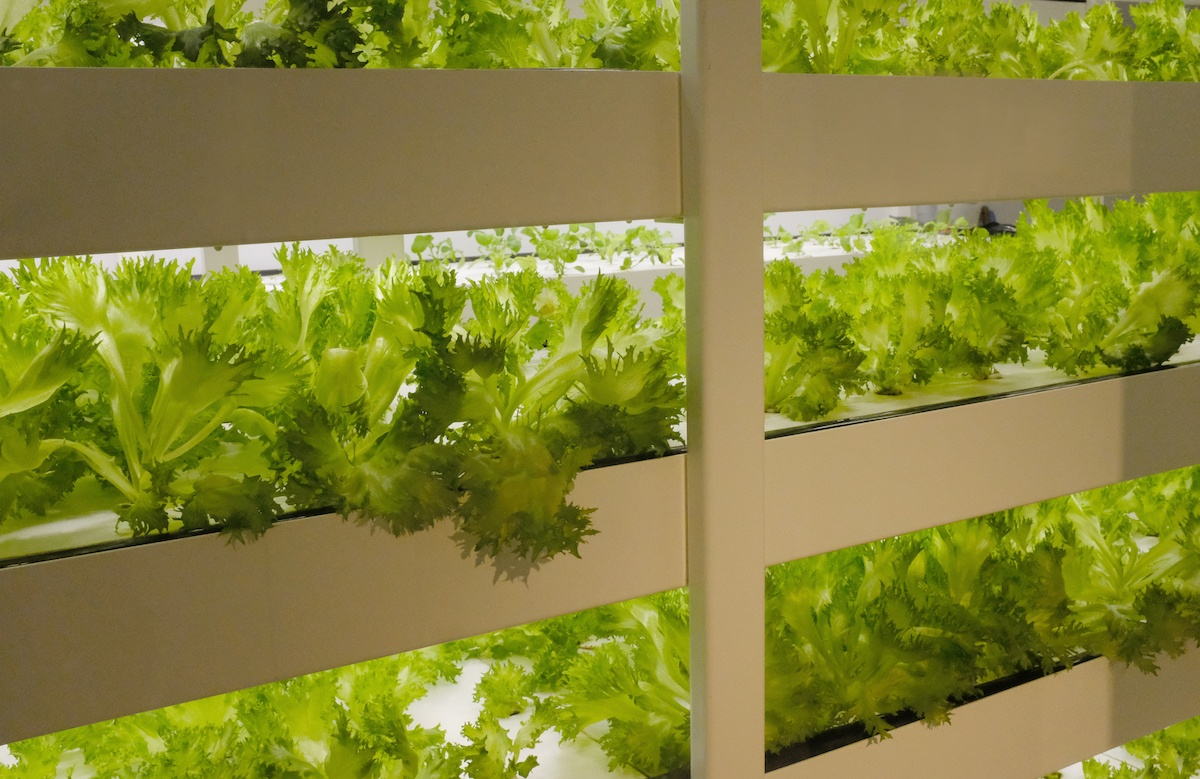 Indoor Farming Controlled Environments | Growlink